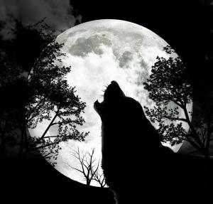 lupo-luna